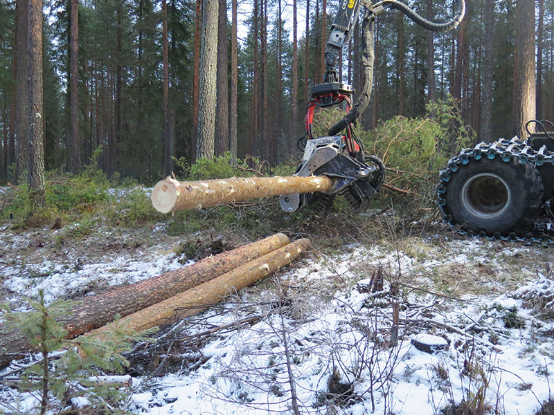 picking logs at the forest